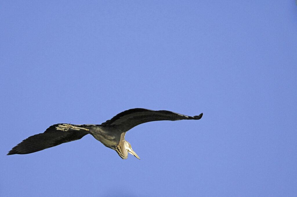 Uccelli migratori lago riserva LIPU Santa Luce