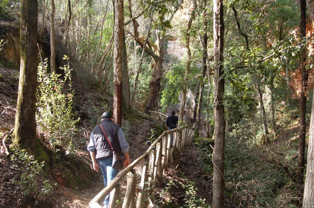 Parco di Montioni sentiero nel bosco