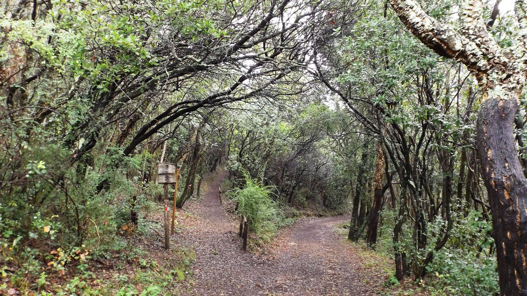 Bosco Riserva Forestale Poggio Neri Sassetta