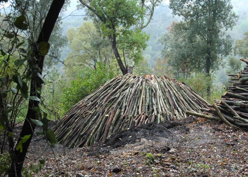 Carbonaia bosco Riserva Forestale Poggio Neri Sassetta