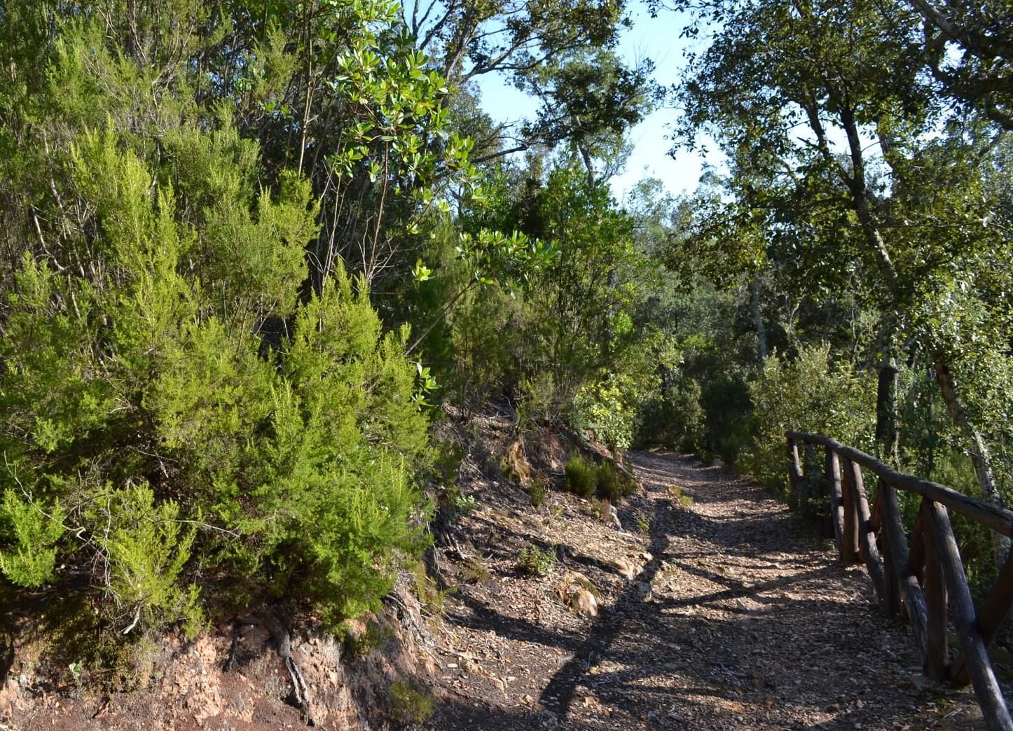 Bosco Parco Montioni sentiero